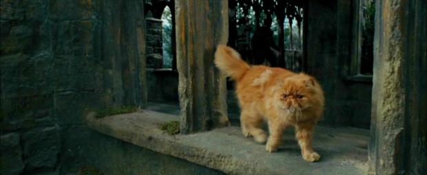 Krzywołap Harry Potter