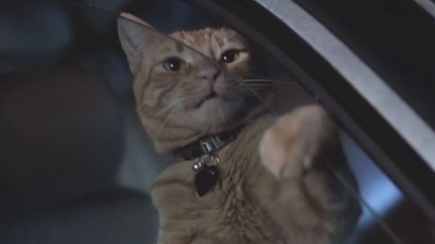 catpower05